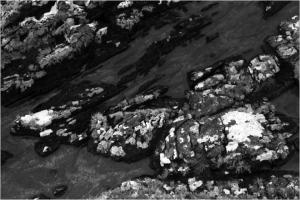 Iona Rocks