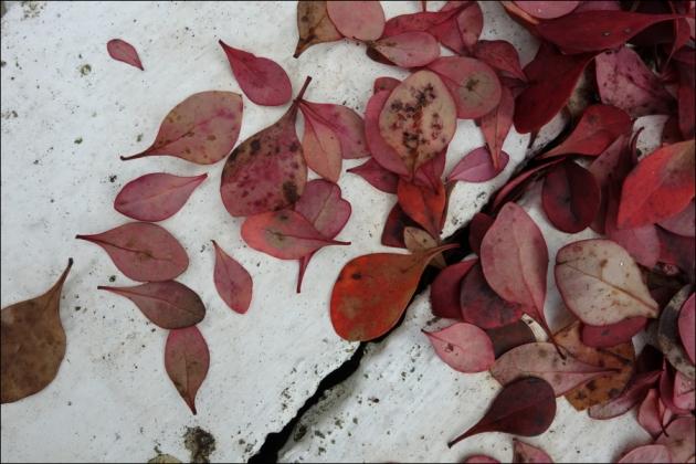 Late Fall 1