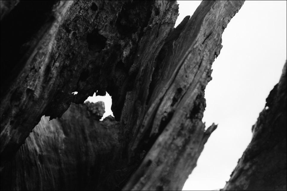 Baum Und Borke
